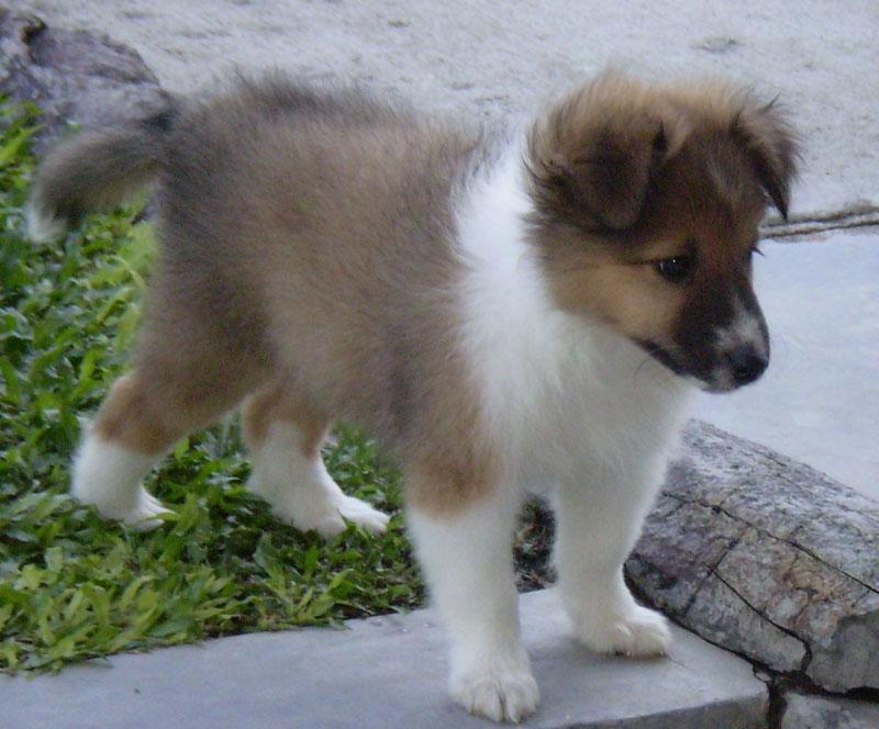 puppy points
